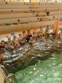 24. 5. 2017 - poslední plavání, žáci 2. ročníku